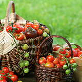 Heirloom variety tomatoes in baskets Colorful tomato - red,yellow , orange. Harvest vegetable cooking conception