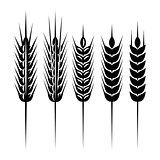 set of monochrome vector spikelets for scenery