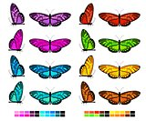 vector butterfly set 2