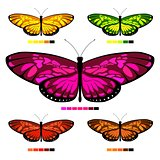 vector butterfly set 3