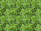 A seamless pattern texture of green carved leaves
