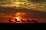 Horses galloping at sunrise