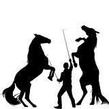 Silhouette of a man trainig two horses to rearing up