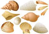 Seashell Set on White Background