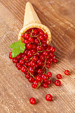 Red currant fruits in ice cream cone