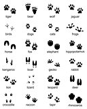 Set of footprints of wild animals