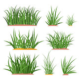 bunch green grass set