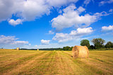 Hay bales in the suni day.