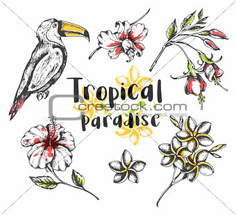 Toucan bird and tropical flowers