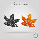 Two Maple Leaves. Autumn maple leaf isolated on a white background. Vector Illustration