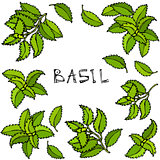 Fresh Green Basil Background and Frame. Aromatic Cooking Herb. Steak Meat Spice. Hand Drawn Illustration. Cute Doodle Style.