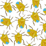 Insect bedbug pattern