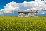 Cumulonimbus storm clouds over an old grain bin and a canola field