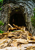 Hollow in the tree. Similar to the cave. A den for animals.