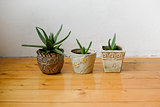 Succulents in different pots on a white background wall and the wooden floor. Home decor.