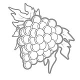 Outline of bunch of grapes in simple style