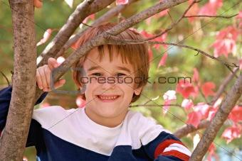 Little Boy in a Tree