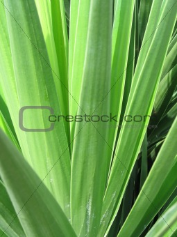 green leaves of a plant
