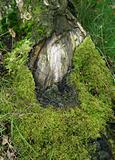 Bark and Moss
