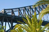 Sydney Harbour bridge palm tree