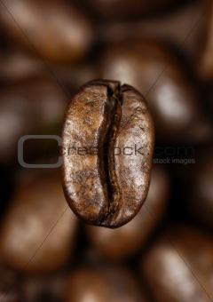 single coffee bean