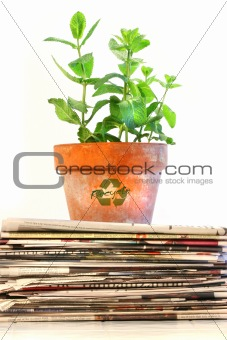 Potted plant on a stack of newspapers