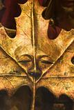 masks from venice - leaf