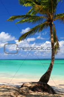 Beach of a tropical island