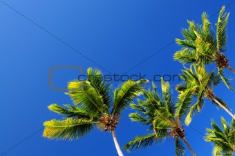 Palms on blue sky