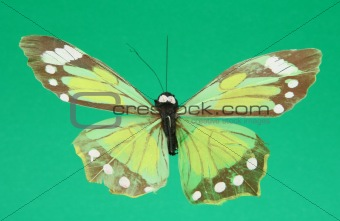 artificial butterfly on green background