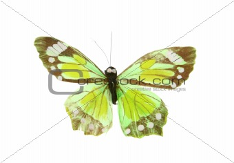 artificial butterfly on white background