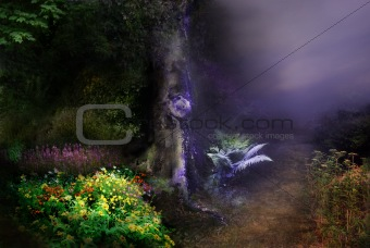 'Fantasy Night In Magical Forest' backgrounds