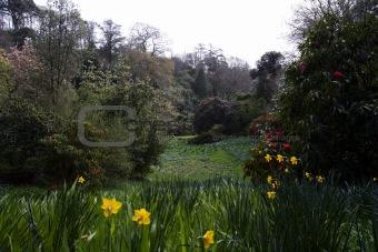 Beautiful summer garden