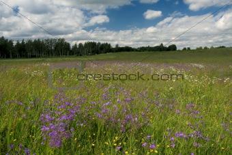 Blue bell field
