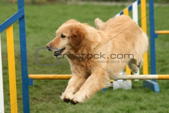 Agility jumping