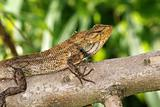 monitor lizard in the gardens