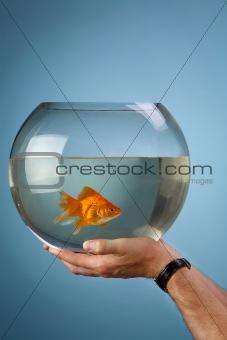 Gold small fish in a round aquarium