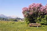 lilac and alps - beauty of austria