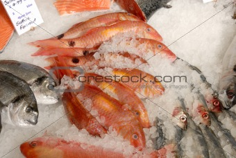 fish on fishmonger's slab