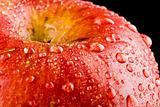 Red Apple  (ZI)