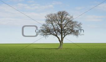 Lonley green