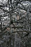 Frozen Branches 2