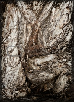 tree bark abstract
