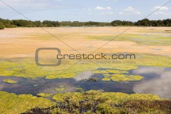 Algaed Lake