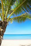 tropic outdoor