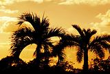 Orange Palm Silhouettes
