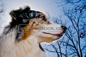 A dog's portrait