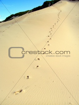 Footprints Up the Dune