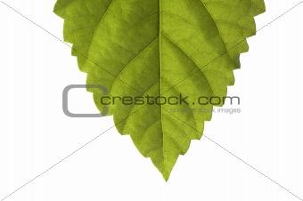 Green sheet.