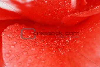Abstract camellia